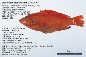 More details for Robalo fish in english